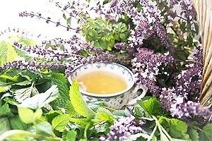 Travy-dlja-pohudenija-recepty