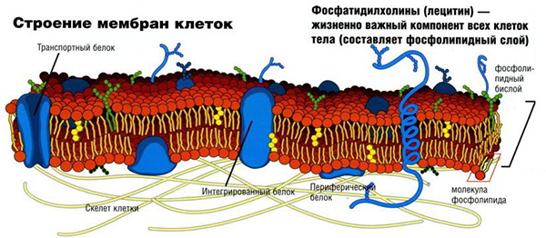 Лецитин для волос